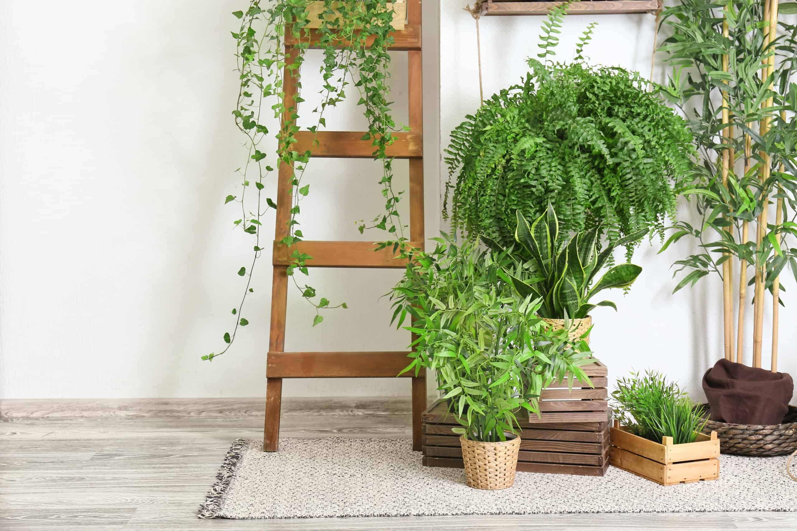 8 Air Purifying Indoor Plants For Your Home to Clean The Air