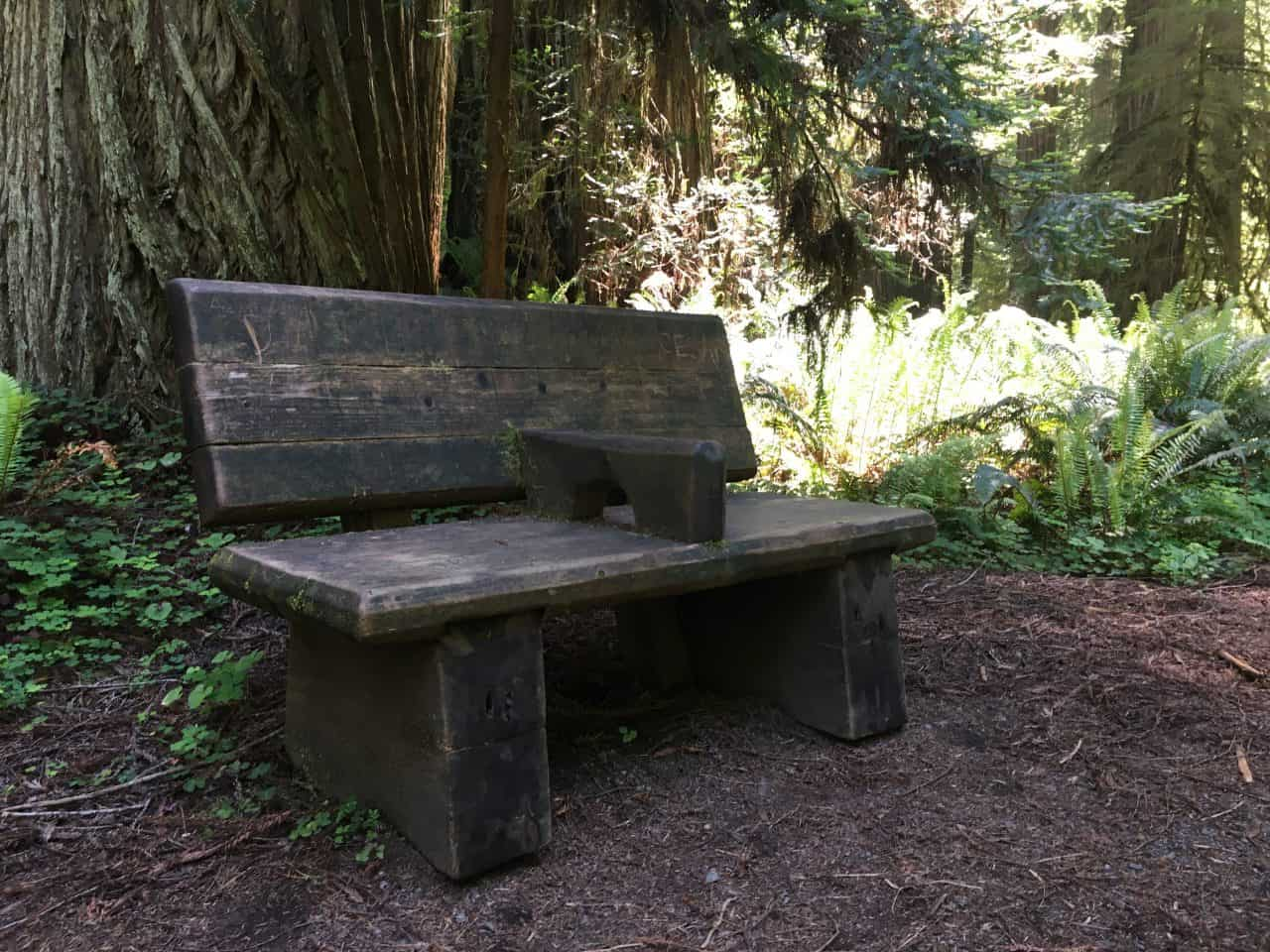 bench in redwood grove