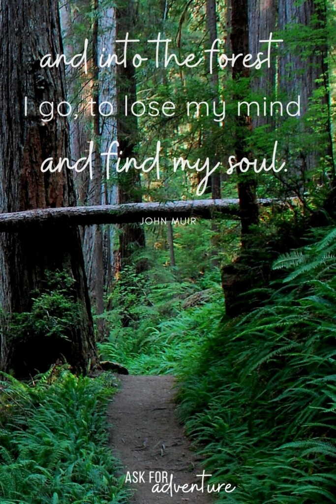 Travel quote by John Muir 10 | and into the forest I go to lose my mind and find my soul.