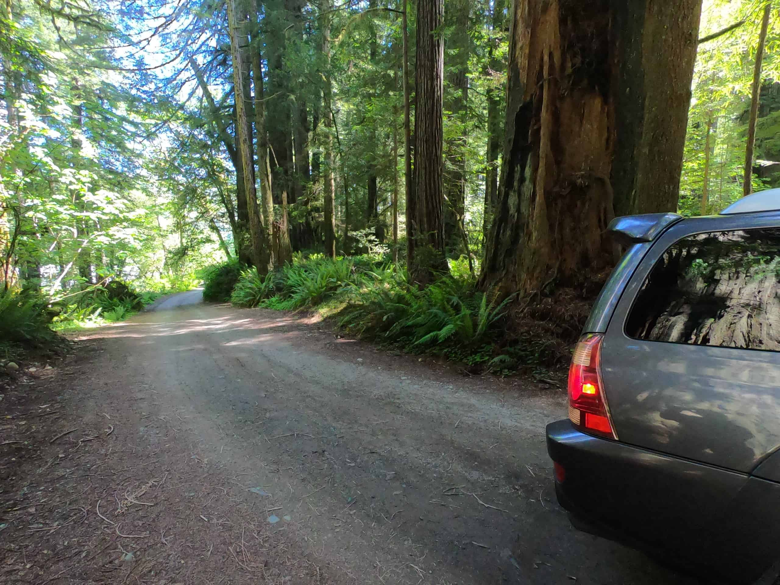 walker road redwoods