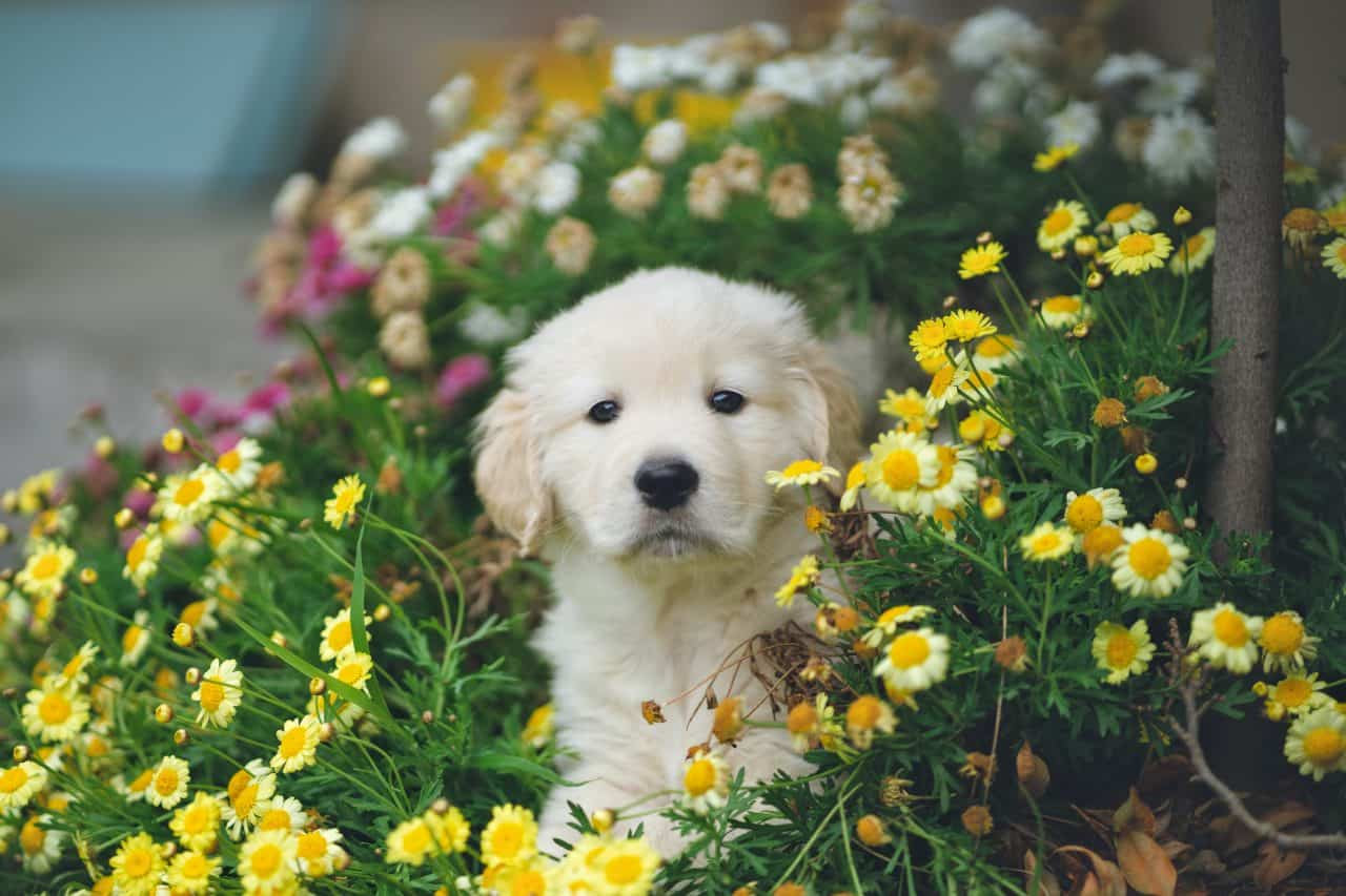 puppy with flowers in the background