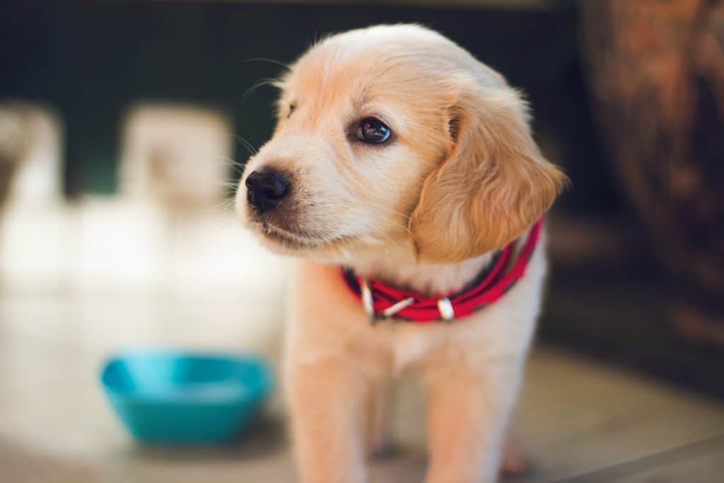 cute picture of a puppy