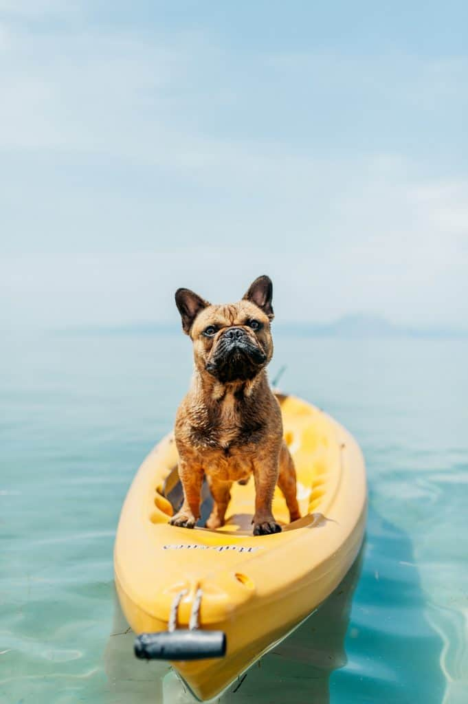 small dog on a kayak