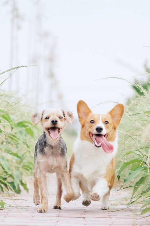 two cute dogs outside