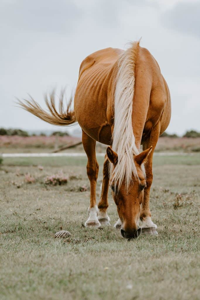 30 Short Horse Riding Captions For Instagram Pictures Ask For Adventure