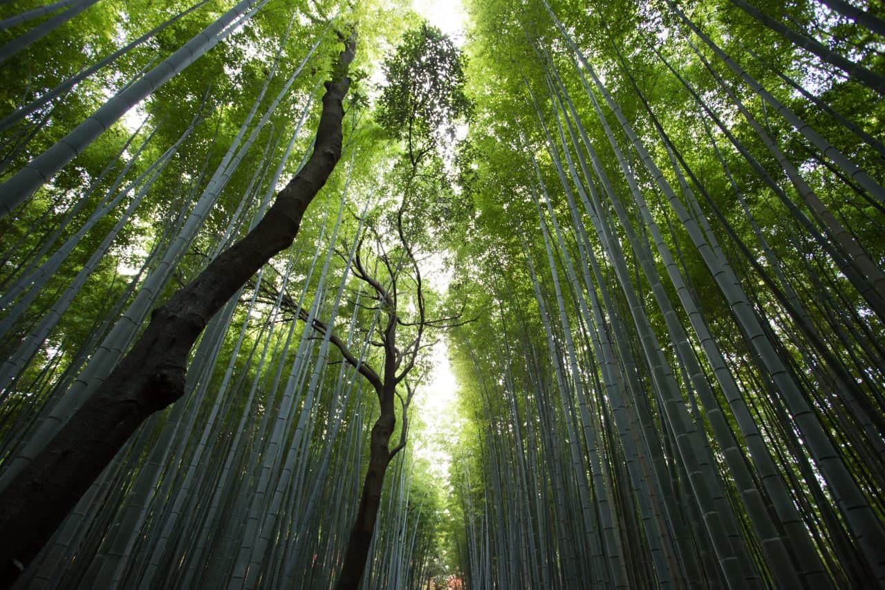 forest with trees and bamboo