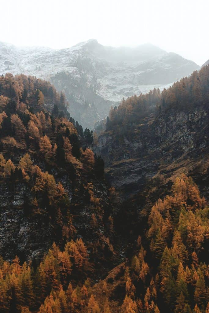 forest and mountains in the fall