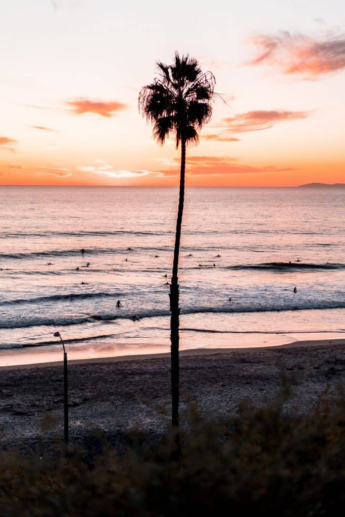 palm tree on beach with sunset in background