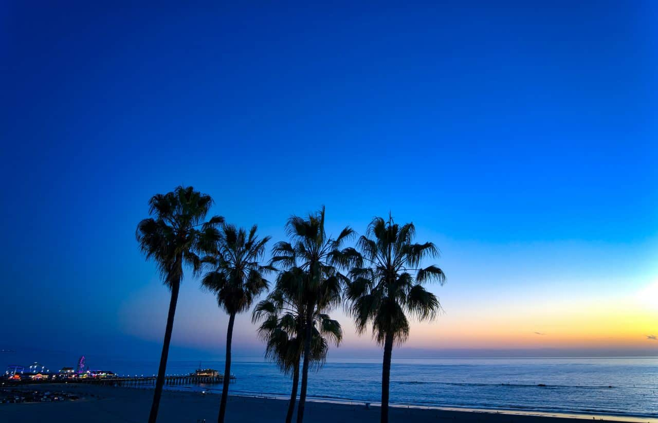 palm trees by pier at sunset