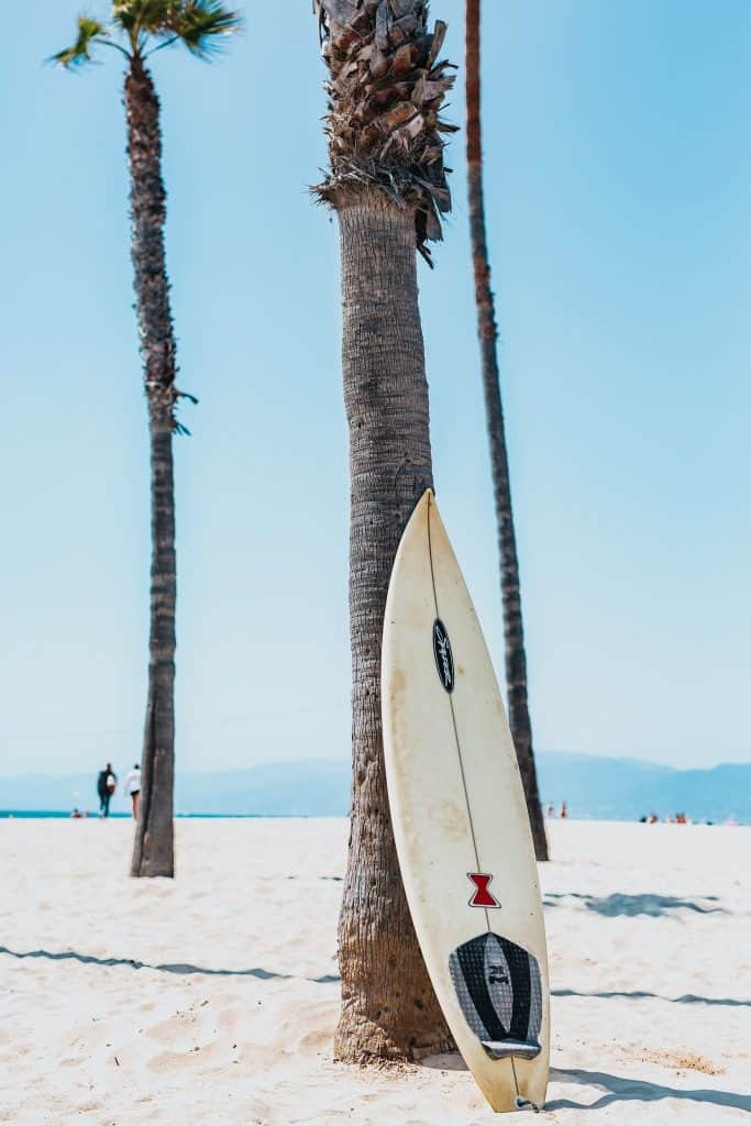 surfboard leaning against palm tree on beach