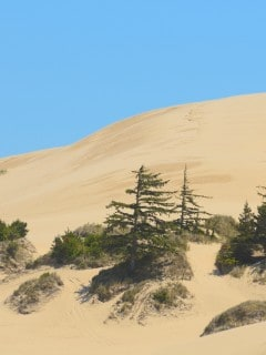 best oregon dunes camping locations