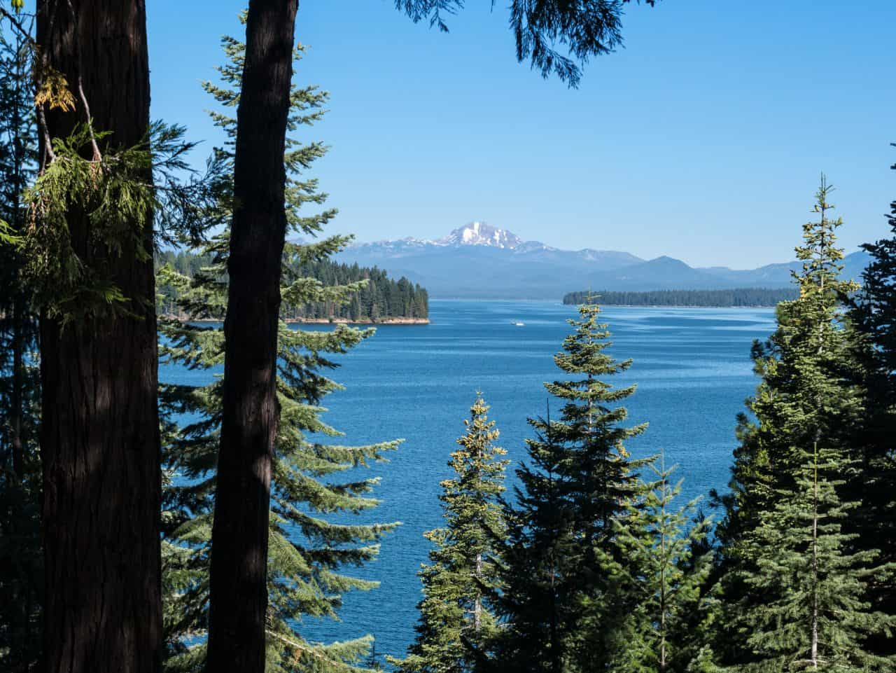 Looking at Lake Almanor though the Pine trees.