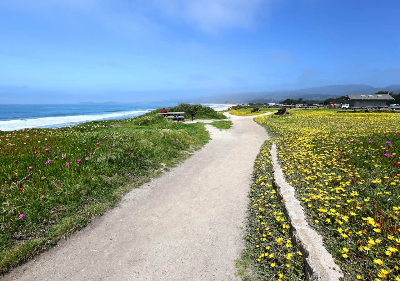 A trail, wildflowers, and view of ocean from Francis Beach