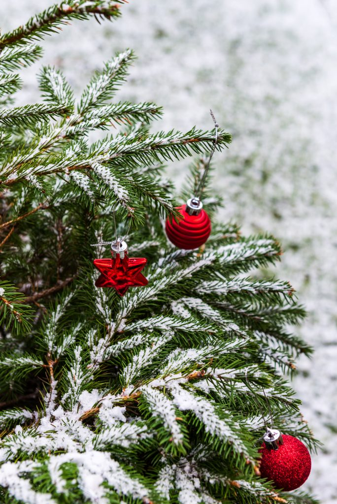 tree covered in snow with ornaments