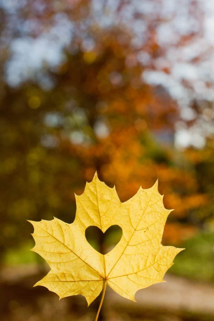 fall leaf with a heart in it