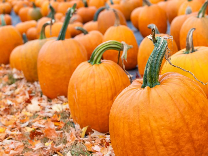 70 Cute Pumpkin Quotes and Captions to Spice Up Your Fall