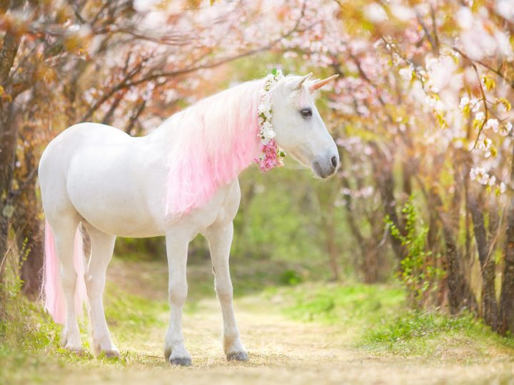 100 Adorable Unicorn Quotes and Captions for a Magical Life!